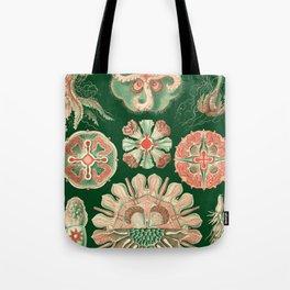 Ernst Haeckel Discomedusae Jellyfish Tote Bag