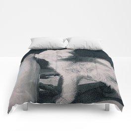 cat's milk Comforters