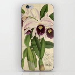 The Orchid Album - Dendrobium Suavissimum iPhone Skin