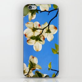 Sunlit Dogwood Blooms iPhone Skin
