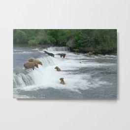 Brown Bears Hunting Fish Metal Print