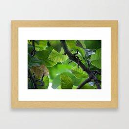 Inside the Green Framed Art Print