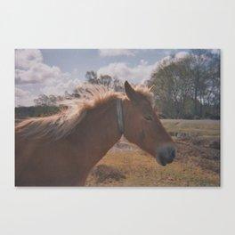 Wild Horse at Heart Canvas Print