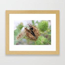 Spikes. Framed Art Print