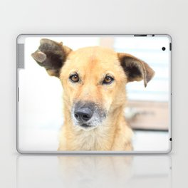 Floppy Ear Puppy Laptop & iPad Skin