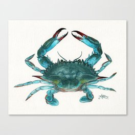 """""""Blue Crab"""" by Amber Marine ~ Watercolor Painting, Illustration, (Copyright 2013) Canvas Print"""