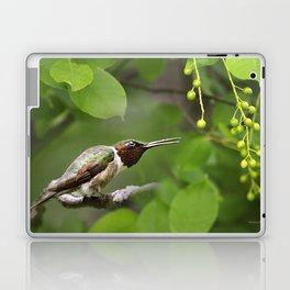 Hummingbird Hiding Laptop & iPad Skin