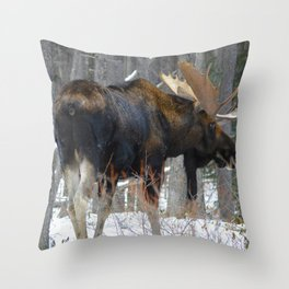 Massive male moose on the loose in Jasper National Park Throw Pillow