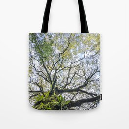Centenary oak with the trunk covered in moss and green plants Tote Bag