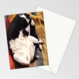 Cat Belly Stationery Cards