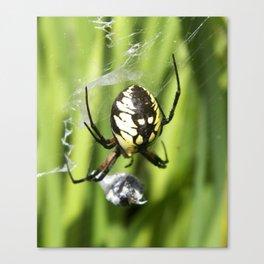 Spider in Vermont Canvas Print