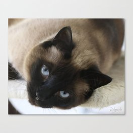 Siamese Soulful Expression Canvas Print