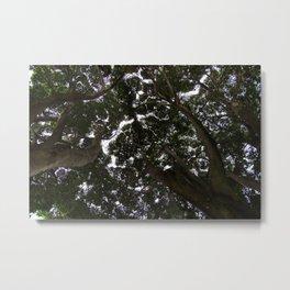 Treetop - Shinrin-Yoku Metal Print