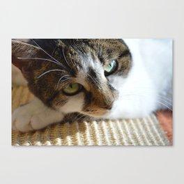 Beautiful Cat Portrait Canvas Print
