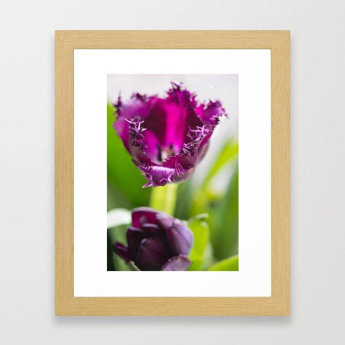 Tulip Lace Framed Art Print