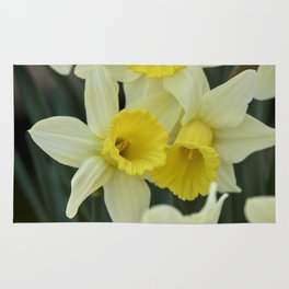 daffodils bloom in spring in the garden Rug