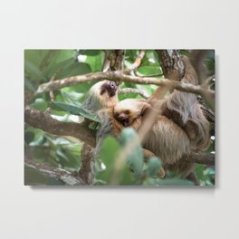 Yawning Baby Sloth - Cahuita Costa Rica Metal Print