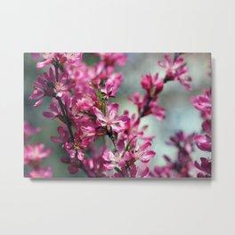 Flower of  wild almond close-up Metal Print