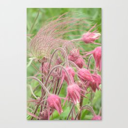 Prairie Smoke Canvas Print