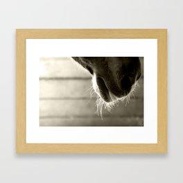 Horse Whiskers Framed Art Print