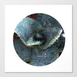 Aloe Vera Plant Photo Canvas Print