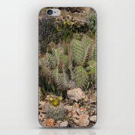 Budding Cactus iPhone Skin