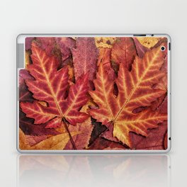 Colorful Autumn Maple Leaf Indian Summer Red Laptop & iPad Skin