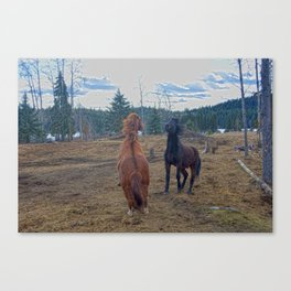 The Challenge - Ranch Horses Fighting Canvas Print