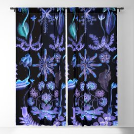 Haeckel's Sea of Darkness Blackout Curtain