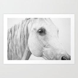 Horse Photography   Wildlife Art   Farm animal   Horse Eye Closeup by Magda Opoka Art Print