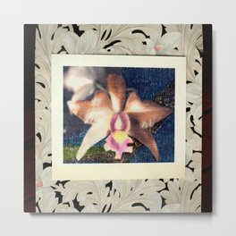 Not Your Usual Corsage Cattleya Metal Print