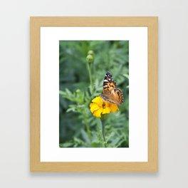 Butterfly on Yellow Flower Framed Art Print