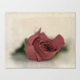 Single Rose fine art photography Canvas Print