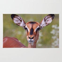 The Impala - Africa wildlife Rug