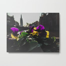 Bruges yellow and purple flowers Metal Print