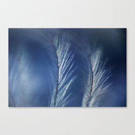 Winter Feathers Canvas Print