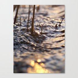 Glittering brook Canvas Print