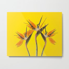strelitzia - Bird of Paradise Flowers II Metal Print