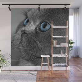 Grey Persian Cat with Blue Eyes Wall Mural