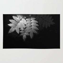 Ferns on Black Rug