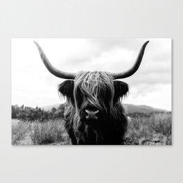 Scottish Highland Cattle Black and White Animal Canvas Print