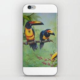 Collared Aracari iPhone Skin