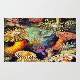 Under the Sea : Sea Anemones (Actiniae) by Ernst Haeckel Rug