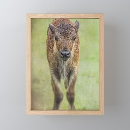 Wet Wood Bison Calf Framed Mini Art Print