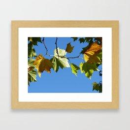 Autumn's looking up Framed Art Print