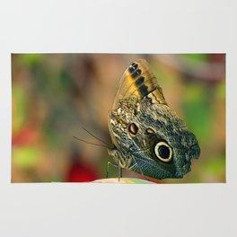 Butterfly - Caligo memnon Rug