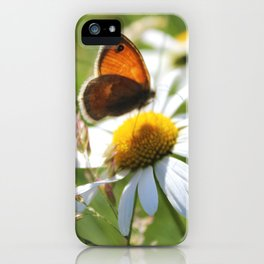 Daisy And Butterfly iPhone Case