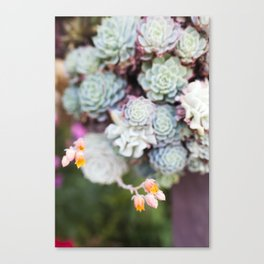 Succulent Bloom Canvas Print
