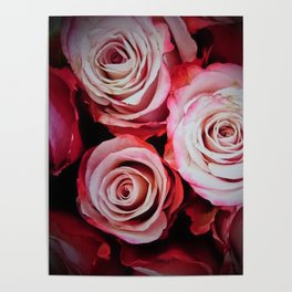 Large Red Roses Poster