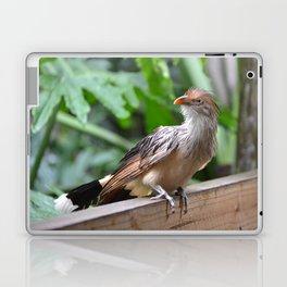 guira cuckoo Laptop & iPad Skin